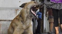 Dog-BG