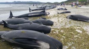 whales-bg