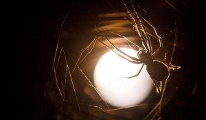 spider (eat)