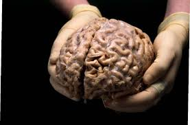 Brain Divided into two parts