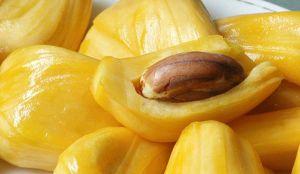 jakfruit seed