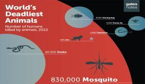 mosquitoes_top