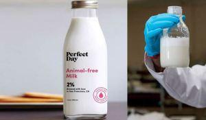 animal free Milk