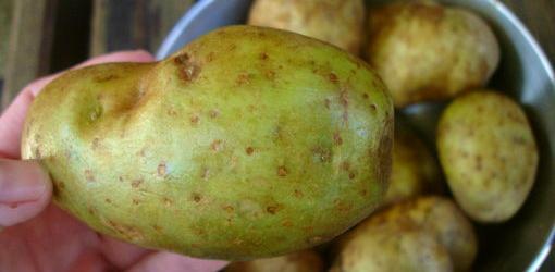 potato-3.jpg