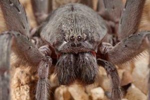 Ball-spider