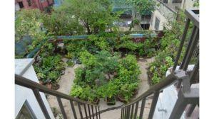 Sade bagan, garden2