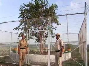'VVIP Tree'2