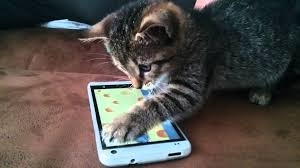 smart phone and cat