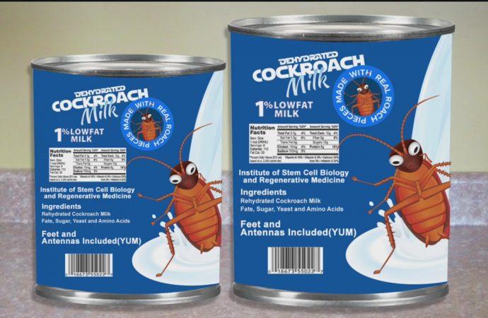 Cockroach milk (telapok)